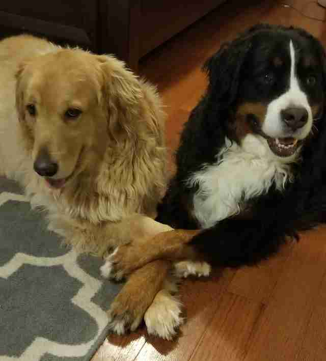 Dogs holding each other's paws