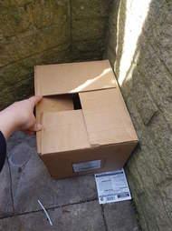ducklings found in a cardboard box