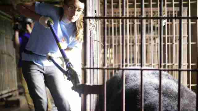 Last bile bears of Ninh Binh province in Vietnam are rescued