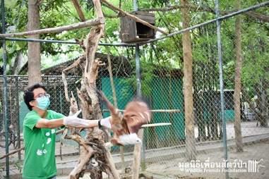 kite rescue thailand