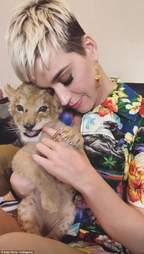 Singer Katy Perry cuddling lion cub