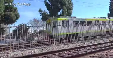 pit bull hit by a train rescued