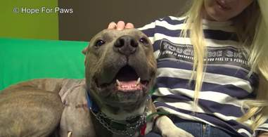 dog hit by a train rescued