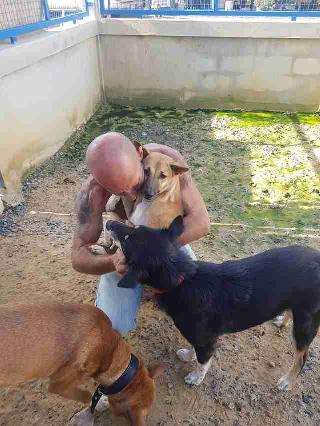 Man with rescued dogs at shelter