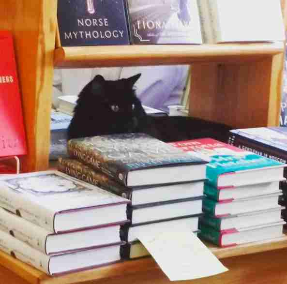 cat adopted by bookstore