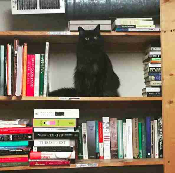 cat works in a bookstore