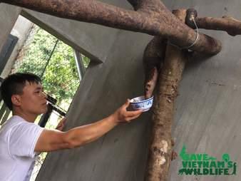 Man feeding rescued pangolin