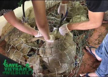 Confiscated pangolins in bags