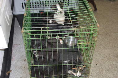 puppies rescued from the illegal puppy trade