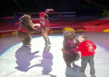 Bears being forced to dance and perform in a circus