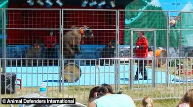 Circus bears being trained