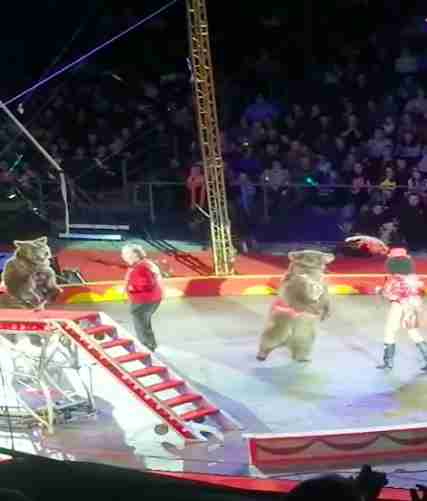 Bears performing in a circus