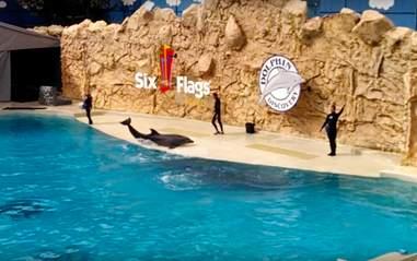 dolphin show mexico