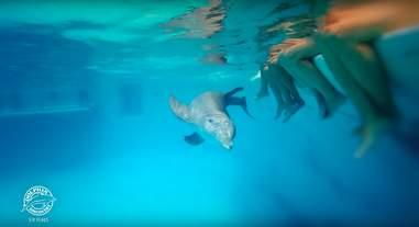 captive dolphins mexico