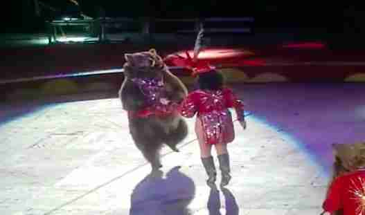 Woman performing with dancing bear