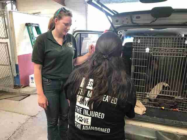 'Pet' macaque going to sanctuary from Texas shelter