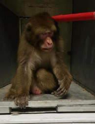 'Pet' monkey at Texas animal shelter