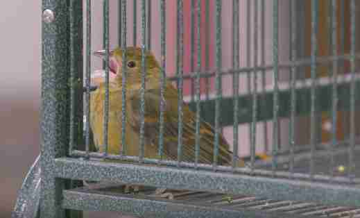 illegal wildlife trade florida birds