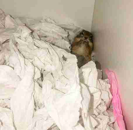 Pregnant rescue squirrel returns to rescuers to have her baby