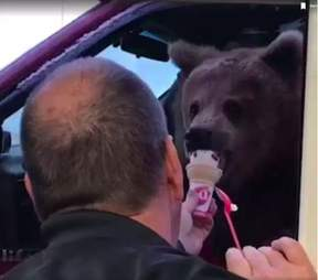 Man feeding bear ice cream