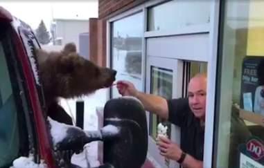 Man feeding wild bear ice cream through window