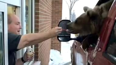 Man feeing bear ice cream at drive-thru