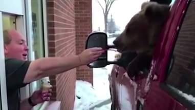 Man feeding wild bear ice cream at drive-thru