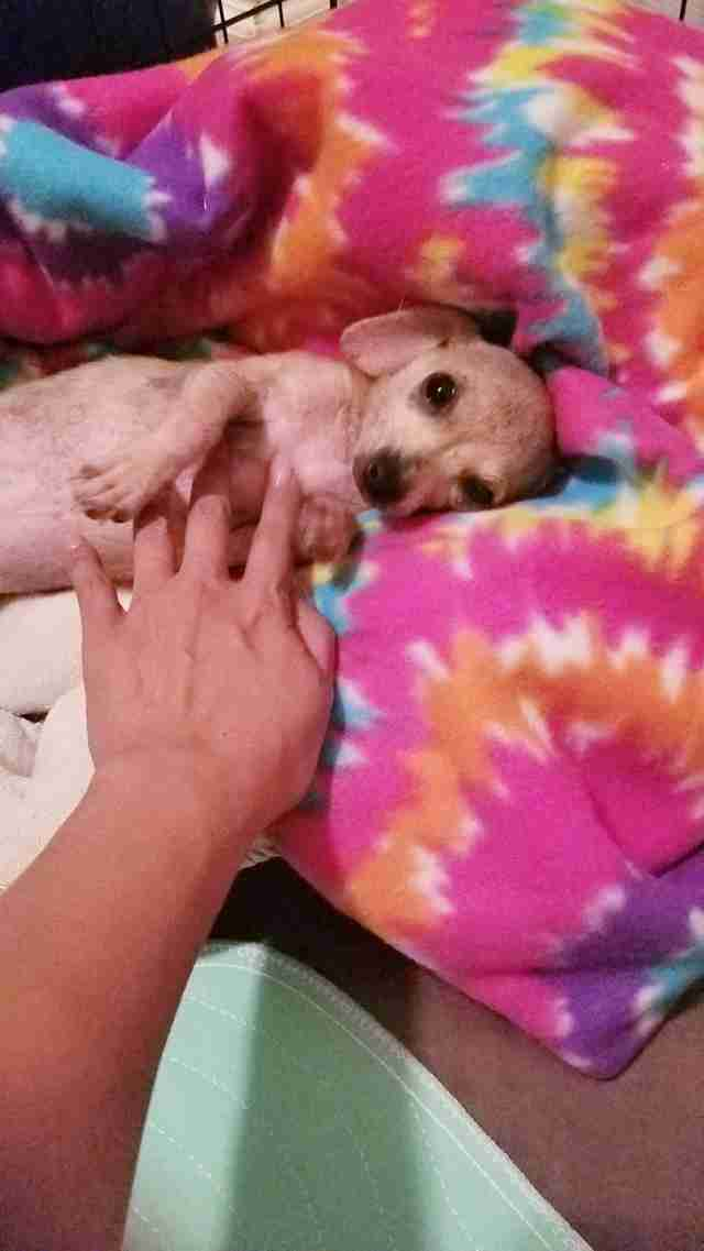 Abandoned dog saved in Fort Worth, Texas