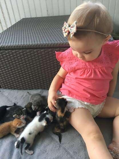 foster cat kitten orphan