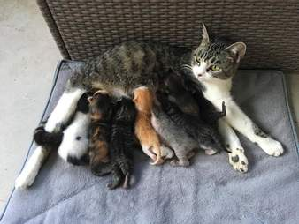 foster cats rescue