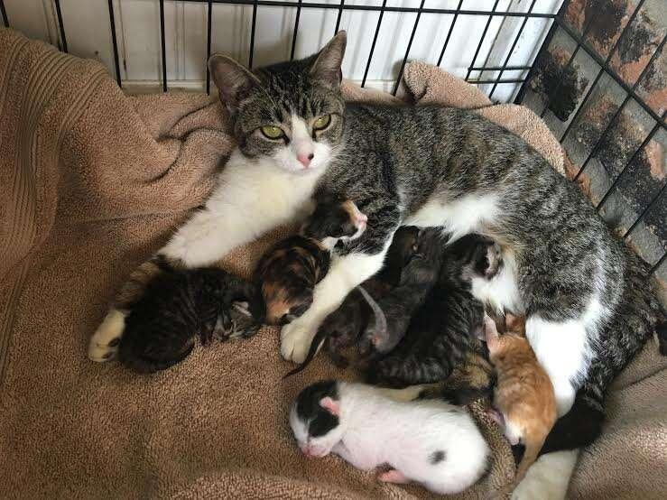 foster mom cats kittens