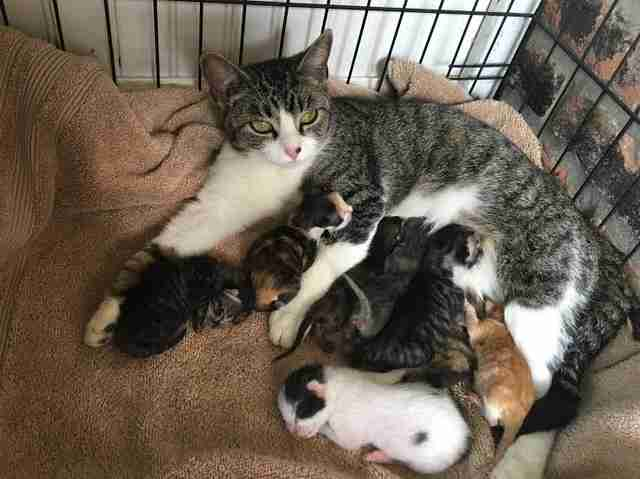 foster mom cats kittens