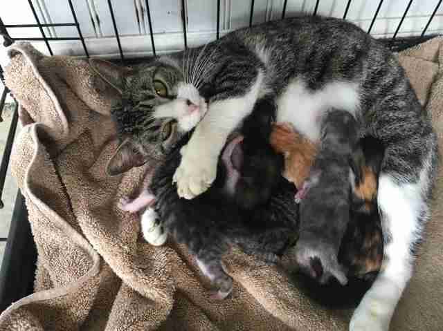 rescue cat orphan foster mom