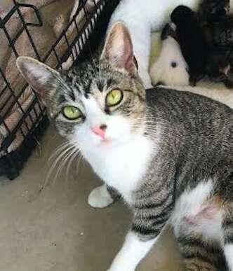 mother cat foster kittens orphan