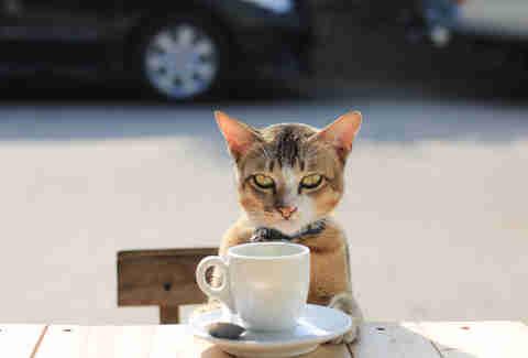 Coffee Stunting Growth Myth