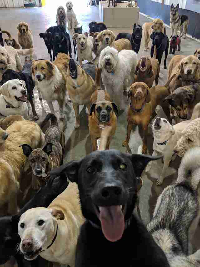This Epic Dog 'Selfie' Is The Happiest Thing You'll See All Day