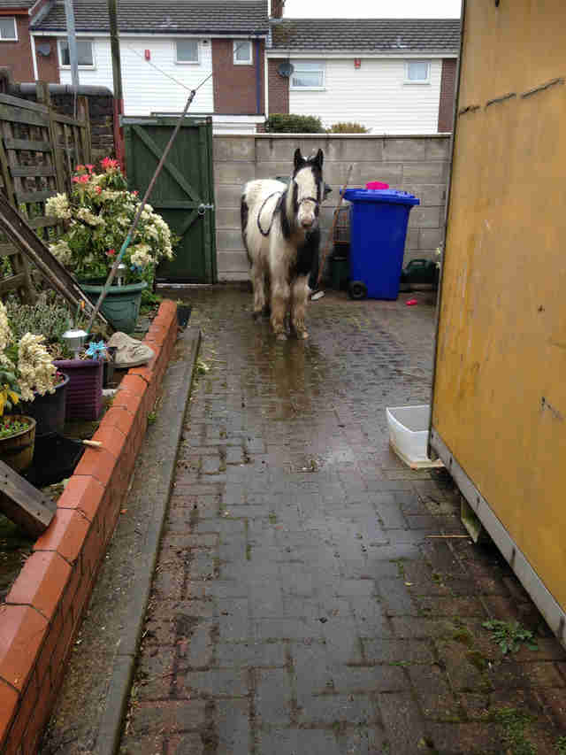 horse found in backyard