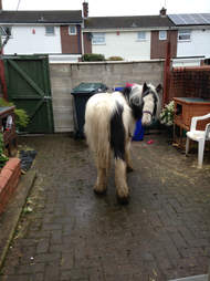 horse found in a backyard