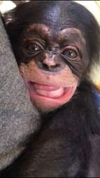 Orphaned chimp smiles at rescuer