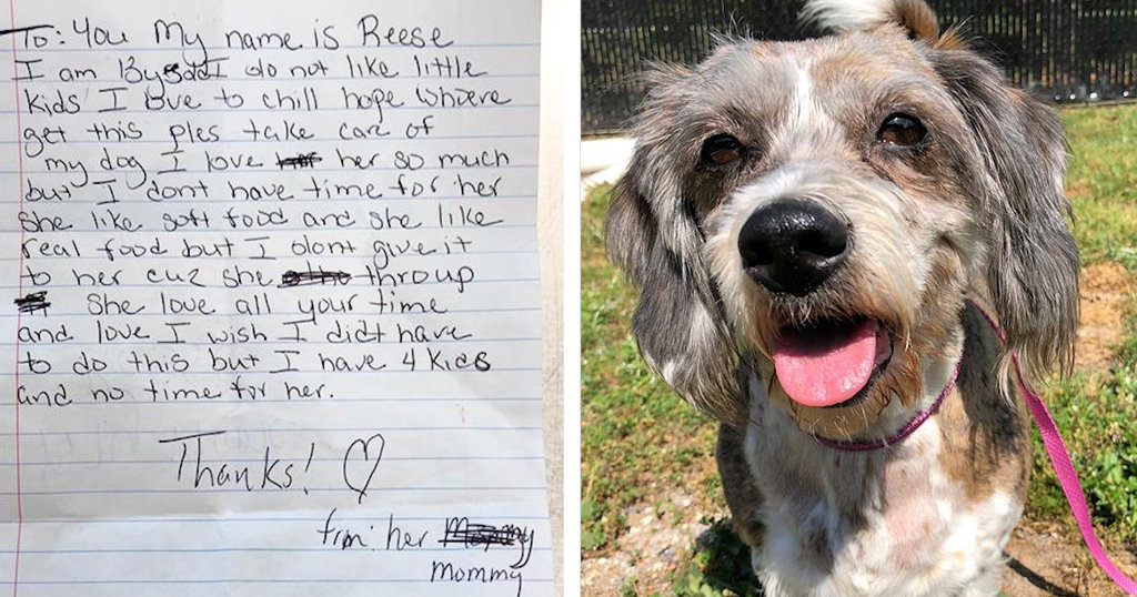 Senior Dog Left On Someone's Lawn With The Saddest Note