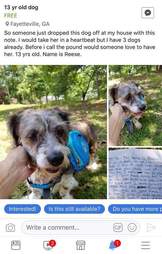 Facebook post about found dog