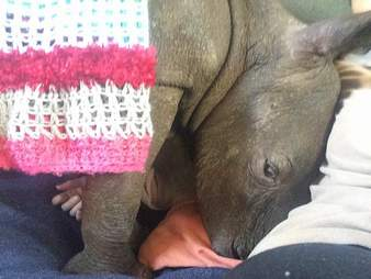 Rhino orphan at rescue center