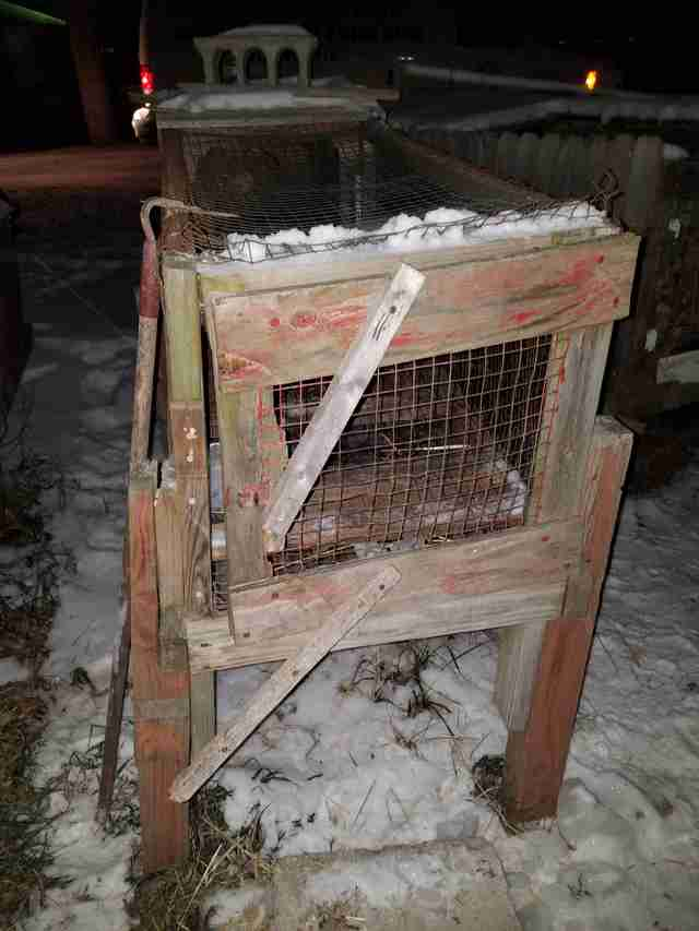 Rabbit hutches covered in snow