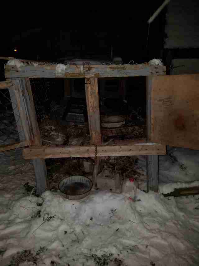 Empty rabbit hutches in the snow