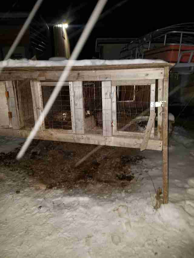 Rabbit hutch in snowy backyard