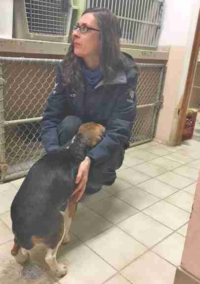 Woman cuddling rescued beagle
