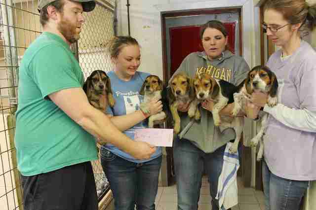 People holding rescued beagles in their arms