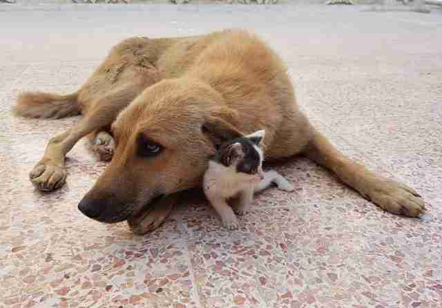 Dog and cat cuddling together