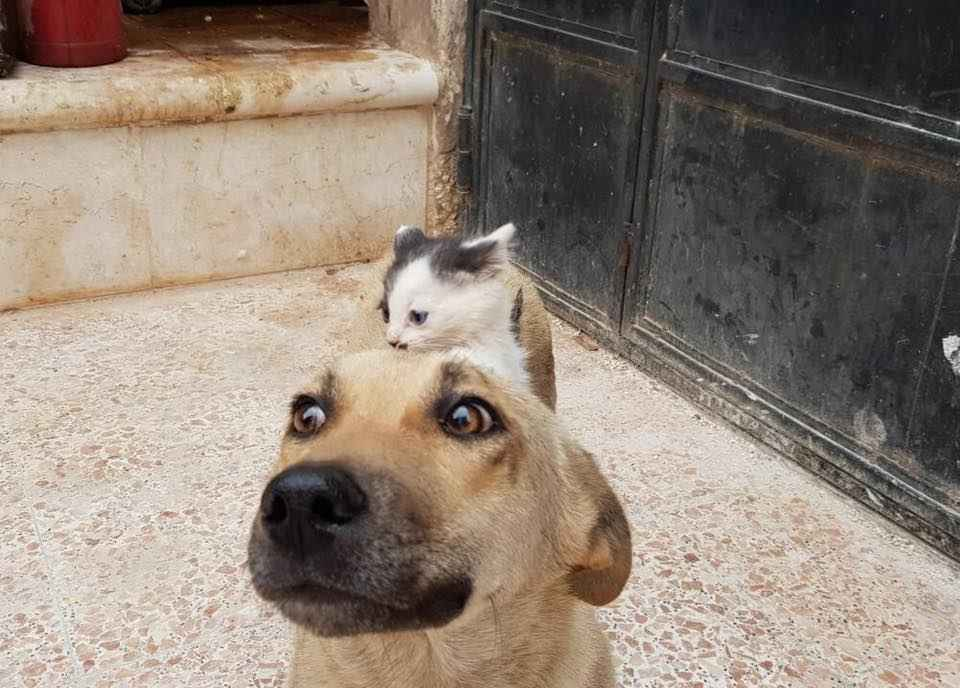 Tiny Kitten Who Lost Her Mom Convinces Stray Dog To Adopt Her