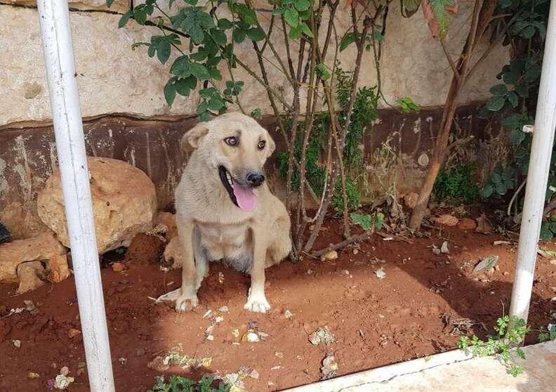 Stray dog sitting in dirt